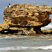 Table Rock at Aireys Inlet Beach on Great Ocean Road, Australia<br /> Nature has carved two prominent limestone and basalt structures along Aireys Inlet Beach. These male Australian darters are drying their wings on top of Table Rock. Nearby is Eagle Rock, a tall volcanic stack. Surrounding their base is hormosira banksii. This slimy brown seaweed endemic to Australasia is commonly called Neptune's necklace or Neptune's pearls. These coastal waters are included in the 42 acre Eagle Rock Marine Sanctuary.