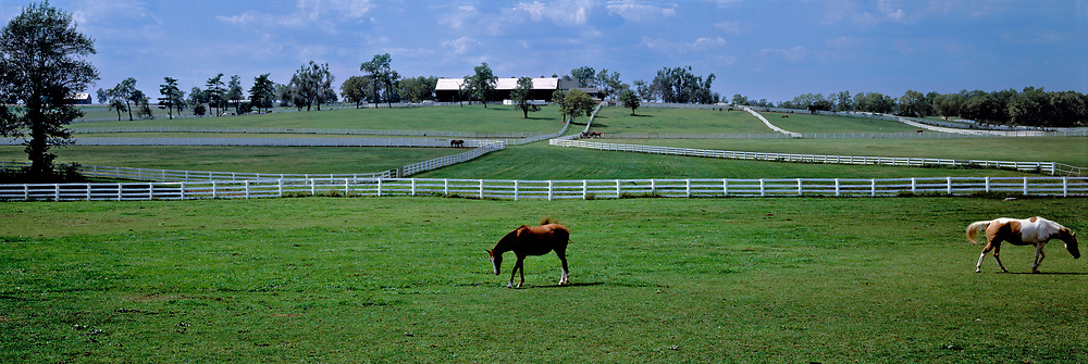 Retired horses graze at the Kentucky Horse Park, nar Lexington, Kentucky.