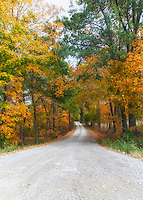 Vibrant Autumn Trees Drape the Gravel Road with a Warm Welcome