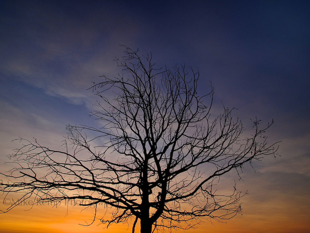 A tree is contrasted by the twilight skies by Greers Ferry Lake.