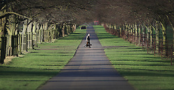 © Licensed to London News Pictures. 31/12/2015. London, UK. A man walks his dog in Bushy Park. Photo credit: Peter Macdiarmid/LNP