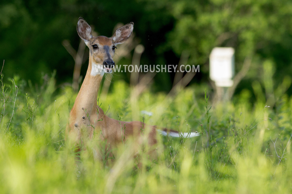 Goshen, New York - Wildlife scenes from the 6 1/2 Station Road Sanctuary on June 20, 2014.