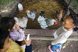 Children feeding chickens on a visit to a city farm,