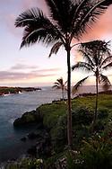 Palms of Hana - Maui, Hawaii