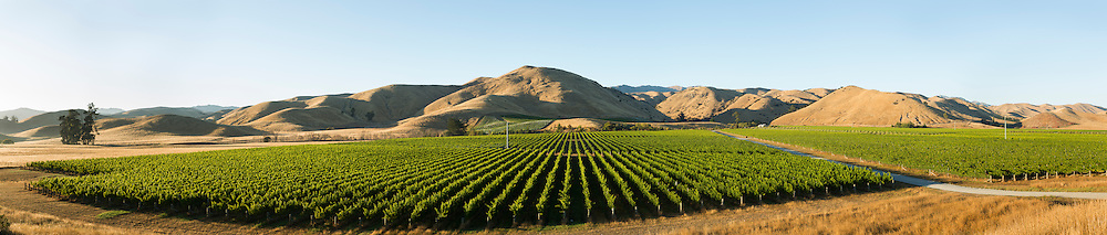 Paroramic view of Brancott Estate vineyard in late summer with dry Marlborough hills in the background.