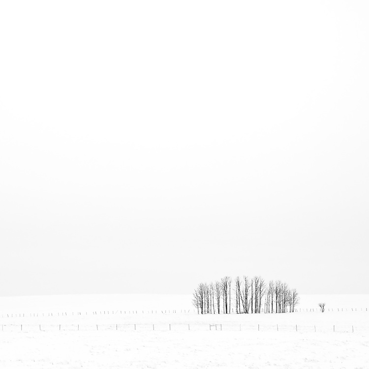 Minimal shot of some trees in a snow covered landscape
