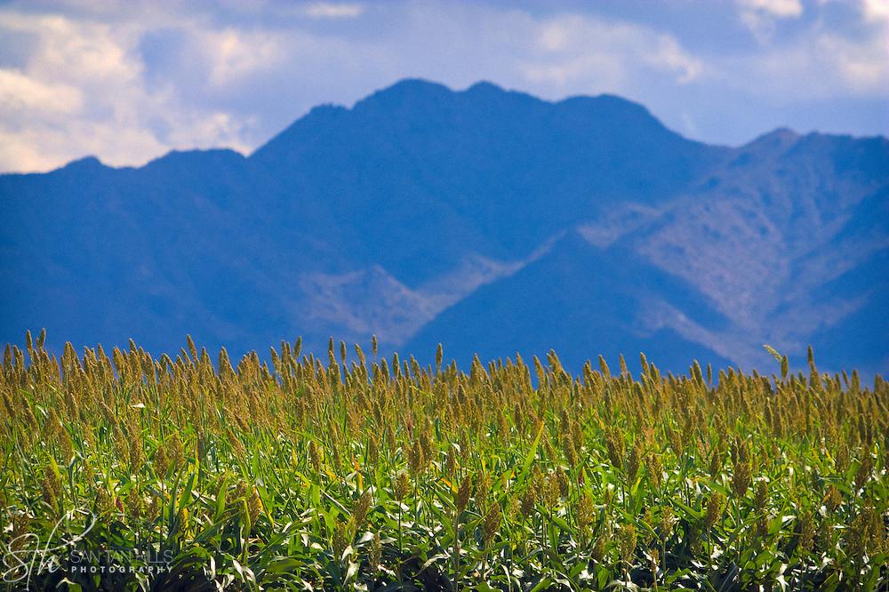 San Tan Mountain beyond field - AZ