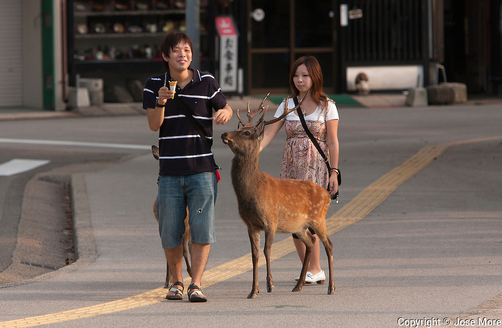 Sitka deers roam free in the island. Itsukushima is an island in the western part of the Inland Sea of Japan, northwest of Hiroshima Bay. It is popularly known as Miyajima, the Shrine Island. The Itsukushima Shrine, a UNESCO World Heritage Site. During low tide visitors walk out to the large torii serves as the entrance to the popular Shinto Temple. <br /> Photography by Jose More