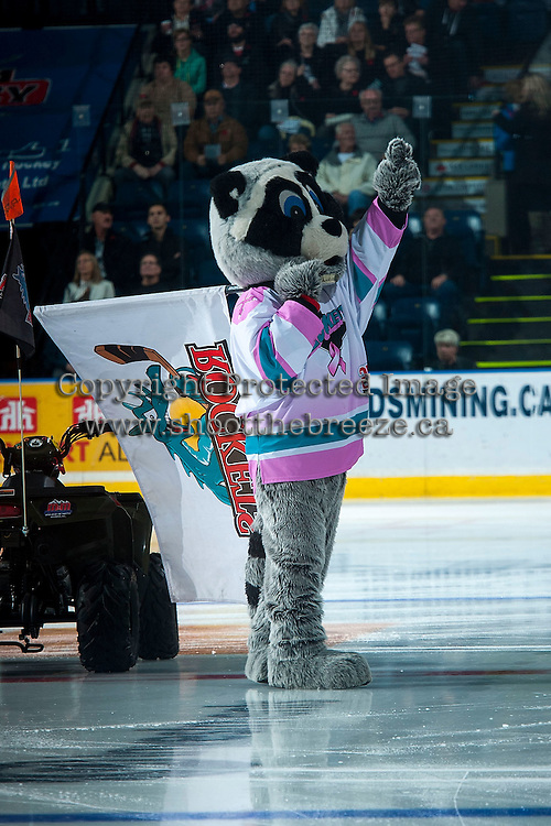 KELOWNA, CANADA - NOVEMBER 11: Rocky Racoon, the mascot of the Kelowna Rockets stands on the ice against the Vancouver Giants on November 11, 2015 at Prospera Place in Kelowna, British Columbia, Canada.  (Photo by Marissa Baecker/ShoottheBreeze)  *** Local Caption *** Rocky Racooon;