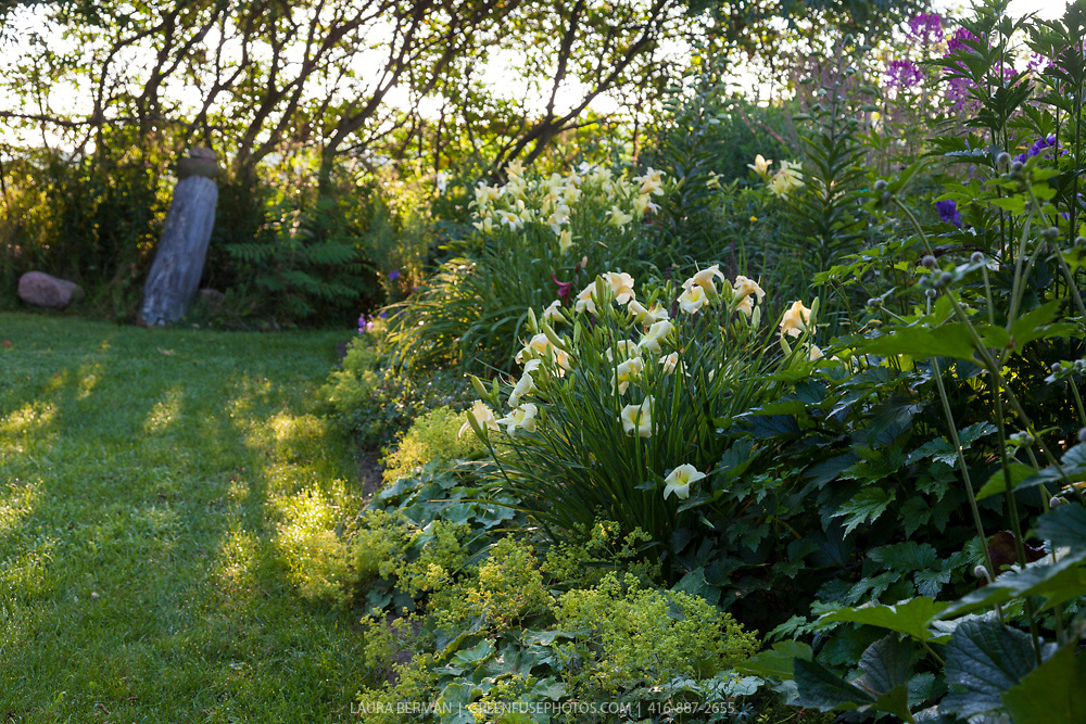 Jane Currelly's garden.