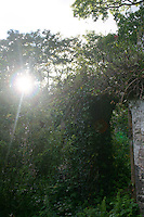 Sunlight shining directly over overgrown ruin in Ireland