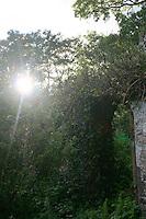 Sunlight shining directly over overgrown ruin in Ireland