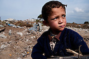 Four-year-old Hamza Hamoudah gathers firewood from the wreckage of his family's orange groves in Jabaliya, near Gaza's eastern border with Israel.