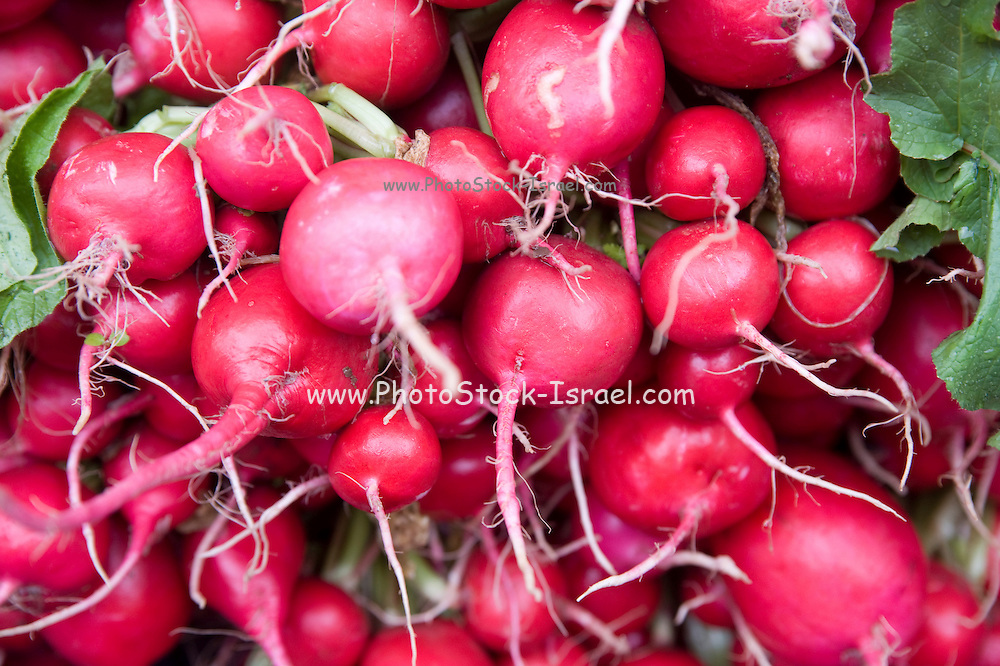 A stack of fresh red radish