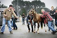 Archief paardenmarkt Utrecht 2005
