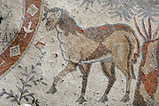 Detail of a Byzantine floor mosaic depicting a lamb, Christian symbol, to the right of the dedicatory medallion with Greek inscription in front of the altar, dating the mosaics to 587 AD, from the Church of Bishop Sergius, built 586 AD in the time of Bishop Sergius of Madaba, Umm ar-Rasas, Amman, Jordan. It was built as a basilica with an apse and elevated presbytery and forms part of an ecclesiastical complex of 4 churches. Umm ar-Rasas is a rectangular walled city which grew from a Roman military camp in the Jordanian desert. Its remains date from the Roman, Byzantine and Umayyad periods (3rd - 9th centuries), including 16 churches with mosaic floors. Excavations began in 1986, although most of the site remains unexplored. It was declared a UNESCO World Heritage Site in 2004. Picture by Manuel Cohen
