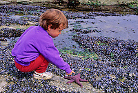 Boy,2, points to purple starfish on a beach on Mayne Island, off the southern coast of BC, Canada.
