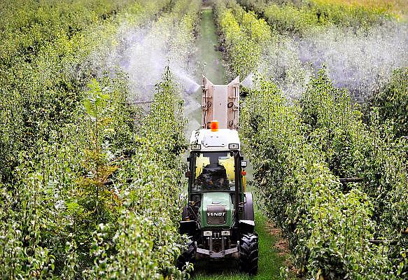 Nederland, Ooij, 14-9-2012Een tuinder rijdt door zijn perenboomgaard en spuit gewasbeschermingsmiddel op de peren die rijp zijn voor de oogst.Foto: Flip Franssen/Hollandse Hoogte
