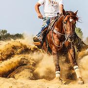 20130624 Paul Horses