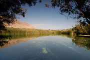 Israel, Judea Desert, Einot Zokim a blooming desert oasis on the shore of the Dead Sea