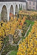 Fall view of vineyard from Munot Castle, Schaffhausen, Switzerland.
