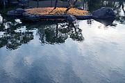 water reflection of Japanese garden pine trees on a little island Tokyo Showa Kinen Park