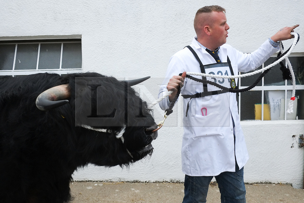 © Licensed to London News Pictures. <br /> 08/07/2014. <br /> <br /> Harrogate, United Kingdom<br /> <br /> A bull is led into the show arena to be judged on the first day of the Great Yorkshire Show. The show is England's Premier Agricultural Event and is based on the 250-acre Great Yorkshire Showground near Harrogate. The Main Ring is the hub of the Show providing a setting for international show jumping and world class cattle parade. The showground is filled with animals, country demonstrations, have-a-go activities and rural crafts.<br /> <br /> Photo credit : Ian Forsyth/LNP