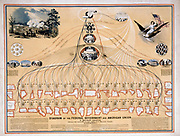 N. Mendal Shafer's 1862 diagram of Federal Government and American Union from President Lincoln and his cabinet through Congress, House of Representatives, and the Supreme Court down to 42 states and Indian Territory. USA