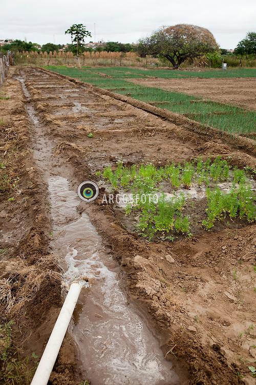 Plantacao de cebola com sistema de irrigacao por escoamento em sulcos, utilizada na regiao semi-arida em Pernambuco. / Irrigation in a onion field in Pernambuco State in Brazil.