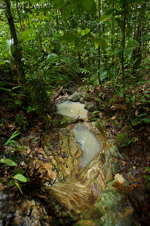 Layers of sedimentary rock exposed in a small rain forest creek on Halmahera Island, Indonesia.<br />