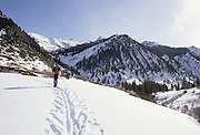 Cross Country Skiing, Cross county skier, Winter, Sequoia and Kings Canyon National Park, California