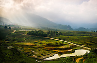 SAPA, VIETNAM - CIRCA SEPTEMBER 2014:  View of typical rice  paddy landscape in Sapa, north Vietnam.