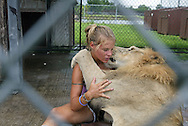 Aries the lion gives sanctuary manager Carrie Krumroy a hug at Elmira's Wildlife Sanctuary near Tampa, Florida