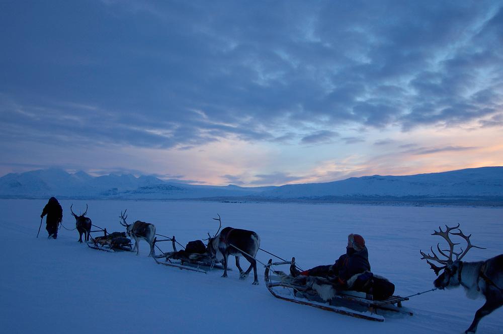 Reindeer sledding safari ecotourism expedition, Stora Sjofallet N.P, Laponia World Heritage Area, Lapland, Sweden.