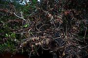 Sao Goncalo do Rio Preto_MG, Brasil...Parque Estadual do Rio Preto, em Sao Goncalo do Rio Preto, Minas Gerais. Na foto detalhe da decomposicao das folhas...The Rio Preto State Park, in Sao Goncalo do Rio Preto, Minas Gerais. In this photo some leaves are decomposing...Foto: LEO DRUMOND / NITRO