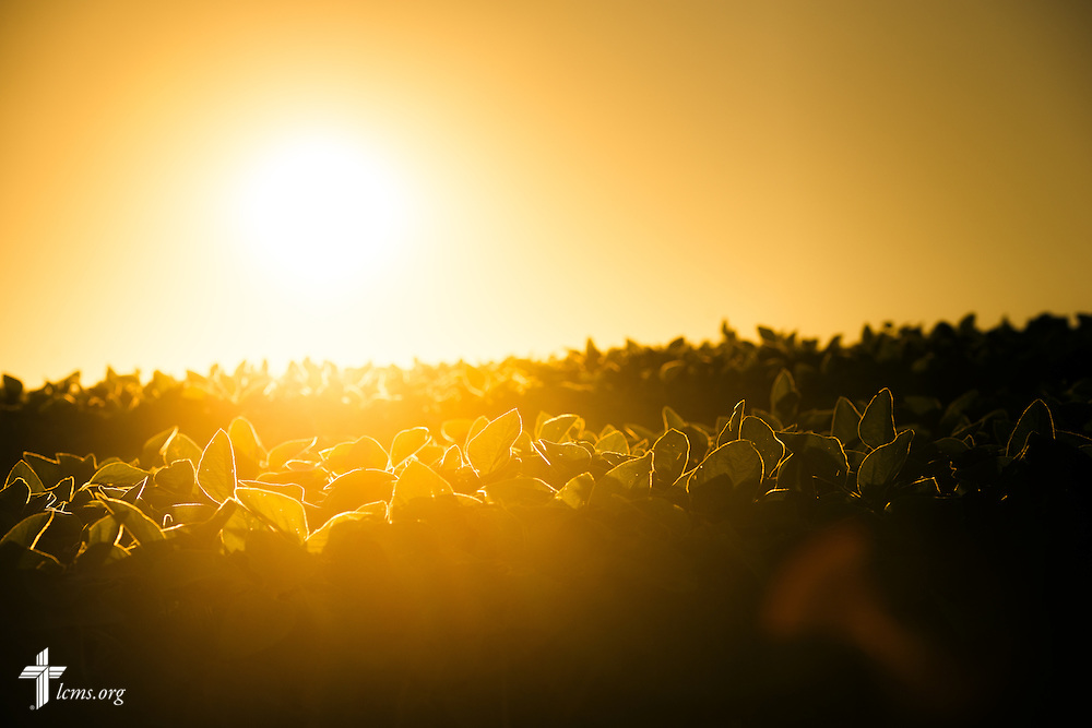 The sun sets over a bean field near Mission Central on Saturday, July 18, 2015, in Mapleton, Iowa. LCMS Communications/Erik M. Lunsford
