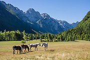 Horses graze in Krma Valley, Triglavski narodni park, near Mojstrana, Slovenia, Europe. Glacially-carved Krma Valley, extends from Mojstrana village to Mount Triglav, in Triglavski narodni park, Slovenia's only national park. In Krma Valley, hike 5-6 hours/6.3miles one way on a non-technical former packhorse hut-supply route (now supplied by helicopter) from trailhead at 950m to scenic Dom Valentina Stanica / Stanicev Dom hut (2332 meters elevation), 20 km round trip, gaining 4658 feet/1420 meters, or a bit further to spectacular Kredarica Hut (aka Triglav hut / Triglavski dom na Kredarici, Slovenia's highest hut, 2515 meters). Reservations are highly recommended. Hike to Kredarica Hut via Konjsko Sedlo pass from Krma valley 6 hrs one way, non-technical, 1650m gain, well marked with red signs. Ascent of Mount Triglav is non-technical, but is not recommended for those who fear heights: 1.5 hours up from Kredarica (contrary to 1-hour sign, due to waiting for descenders) and 1 hour back. Or stay in scenic Planika hut, 2401m. In 1991, Slovenia declared full sovereignty from Yugoslavia. 80% of its 2 million people speak Slovene. In 2004, Slovenia joined NATO and the EU (European Union), and later adopted the Euro € currency. Slovenia is the richest Slavic nation per capita.