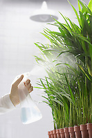 Scientist spraying plants