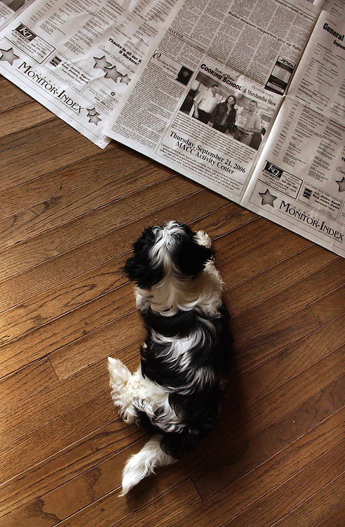 MPW_doggiedaycare_007..The family breeds and trains dogs as well. Until the animals are house broken, Jack and Dee keep newspapers on the floor for the dogs, like this baby Shih Tzu to use...Photo by David Calvert<br />