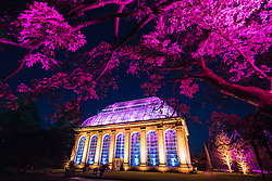 Edinburgh, Scotland, United Kingdom. 24 November, 2017. Edinburgh's newest festive event, Christmas at the Botanics, opened this evening . The illuminations held inside Edinburgh's Royal Botanic Gardens runs for 29 nights. The Glasshouse illuminated in spectacular colours.