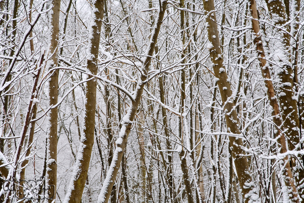 Snow covered trees in Kent England.
