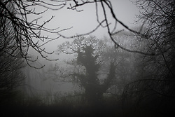 © Licensed to London News Pictures . 23/01/2019. Manchester , UK . St Mary's Park in Prestwich is shrouded in fog . Clear skies and snow shrouds the hills in the North West as fog descends over Manchester City Centre . Photo credit : Joel Goodman/LNP