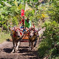 Bali Bull Racing