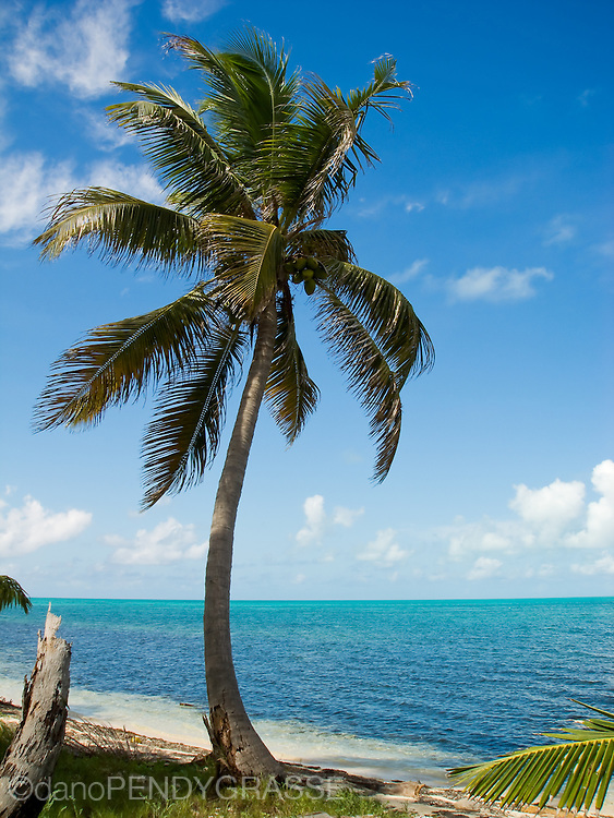 A palm tree stands guard over the turquoise waters surrounding Halfmoom Caye, Belize.