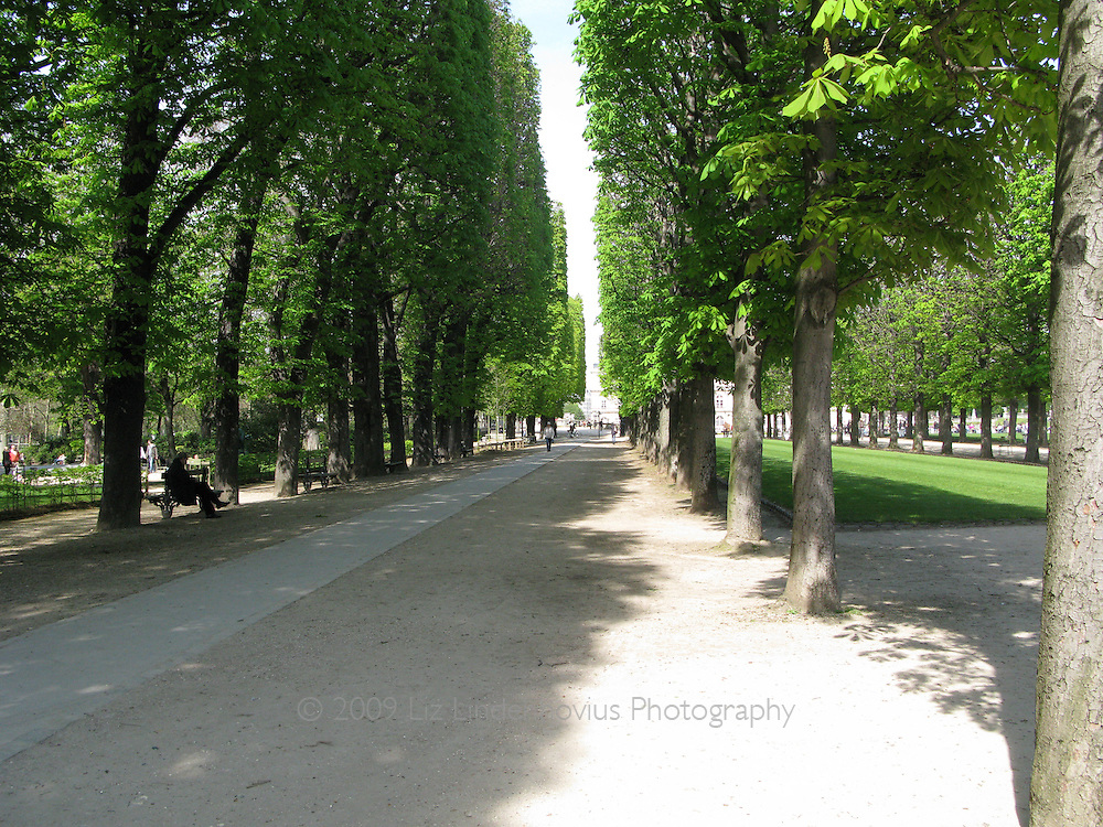 Tree lined path in Luxembourg Gardens, Jardin du Luxembourg, Paris France