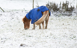 © Licensed to London News Pictures. 05/12/2012..Yorkshire and Cleveland, England..A small pony keeps covered up against the cold weather following overnight snow fall brings the first signs of the wintery weather that is forecast for the rest of this week to the north...Photo credit : Ian Forsyth/LNP