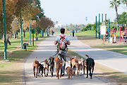 Male Dog walker in the park. Photographed in Tel Aviv, Israel
