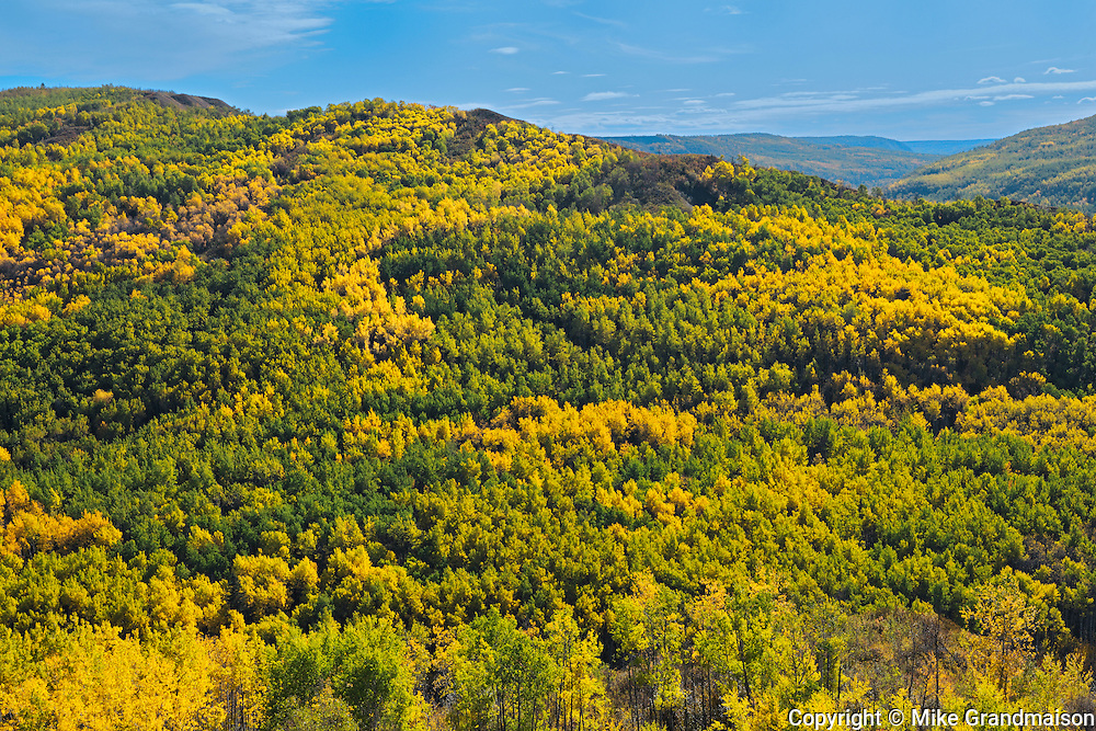 Colorful autumn foliage in hills <br /> Peace River <br /> Alberta<br /> Canada<br /> Peace River <br /> Alberta<br /> Canada