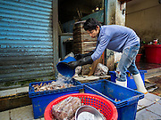 14 AUGUST 2015 - BANGKOK, THAILAND: A man throws water onto a block of frozen fish to thaw it for sorting in Saphan Pla fish market in Bangkok. Saphan Pla fish market is the wholesale fish market that serves Bangkok. Most of the fish sold in Saphan Pla is farmed raised fresh water fish. The market is open 24 hours but it's busiest in the middle of the night and then again from about 7.30 until 11 in the morning.       PHOTO BY JACK KURTZ
