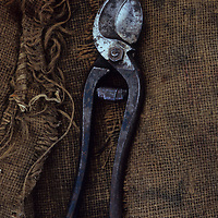 Old secateurs on sack
